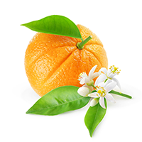 Citrus Flowers Essential Oil Blend