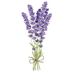 Lavender 40/42 Essential Oil (FP 160*F)