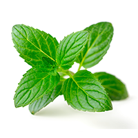 Peppermint Essential Oil (FP 160*F)
