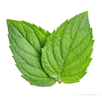 Spearmint Essential Oil (FP 135*F)