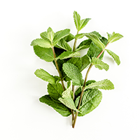 Wild Mint Essential Oil (FP 160*F)